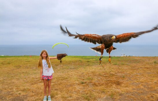 A Rare Opportunity to Try Falconry in La Jolla