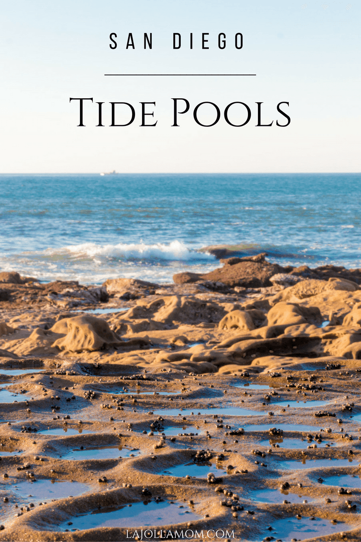 Best tide pools in san diego top 8 tide pools la jolla mom - Clairemont swimming pool san diego ca ...