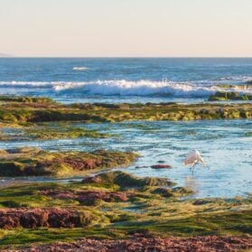 Best Tide Pools in San Diego