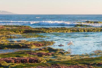 Here's where to visit the best San Diego tide pools from Carbillo Monument to Cardiff.