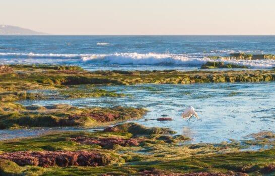 Best Tide Pools in San Diego