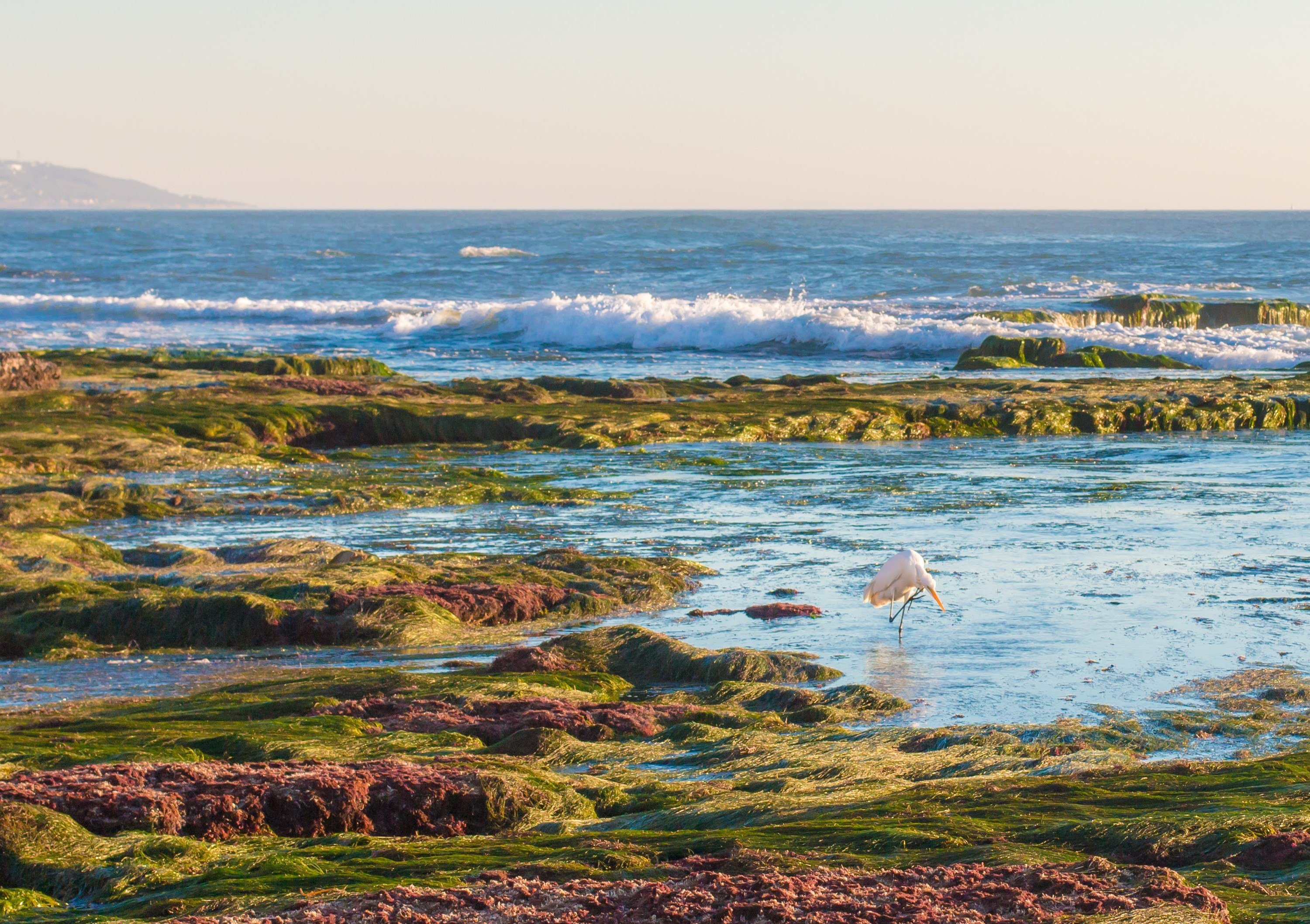 Best Tide Pools in San Diego - Top 8 Tide Pools - La Jolla Mom