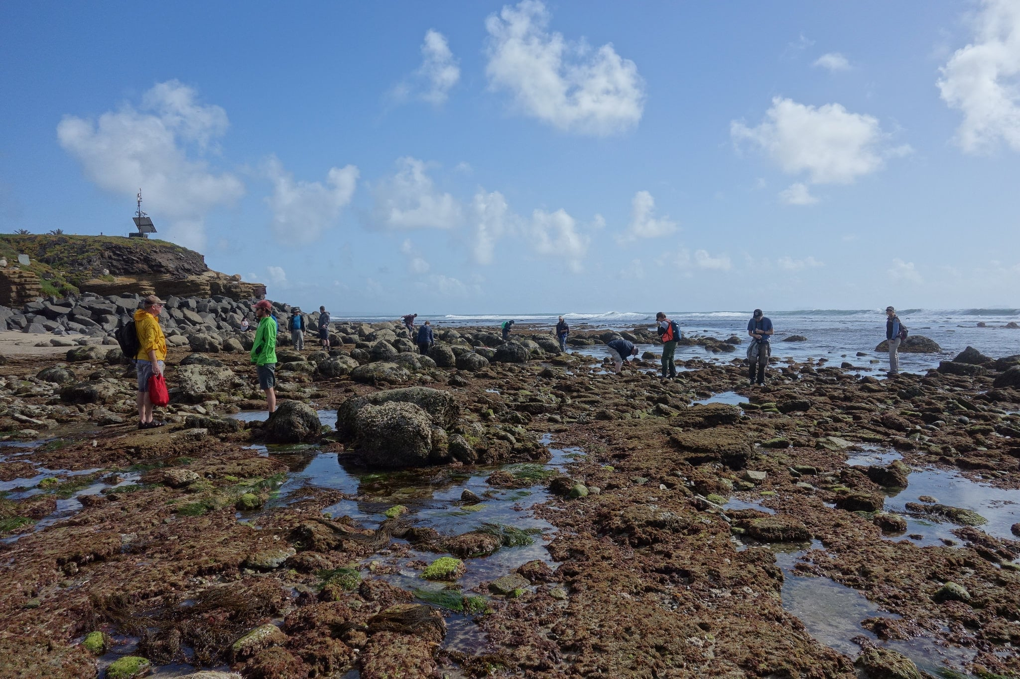 A group of people explores the Cabrillo tide pools at low tide.
