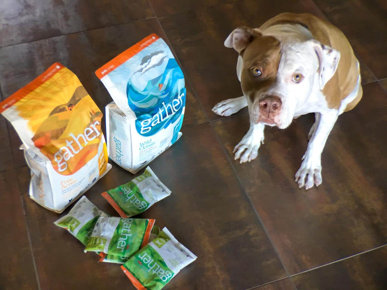 Petcurean's new GATHER line of premium dog food is now available at premium retailers.