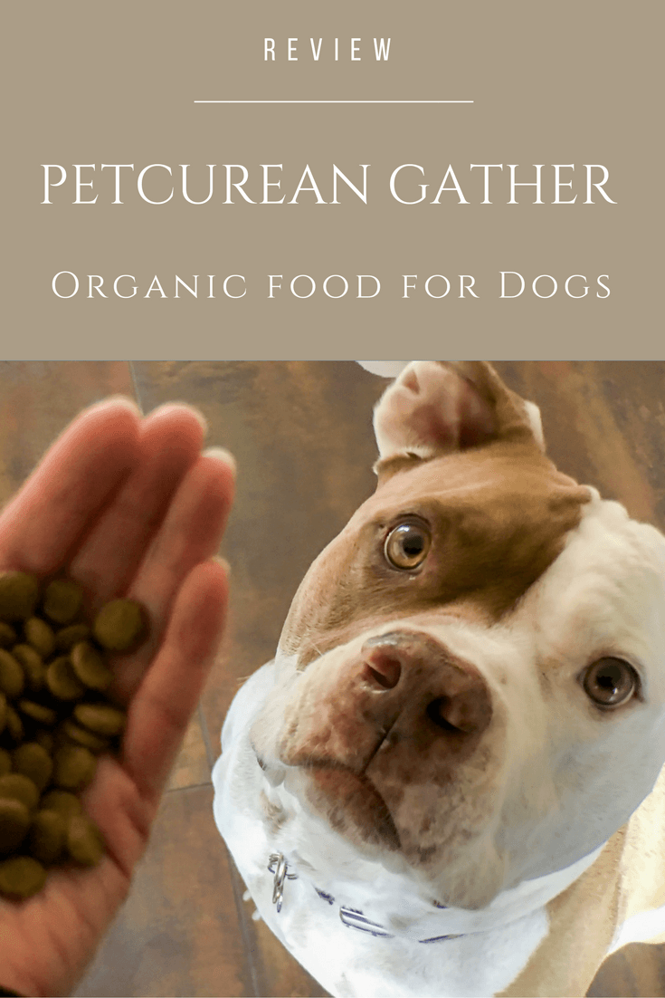 Petcurean's new GATHER line of premium dog food is organic with non-GMO and sustainable ingredients.