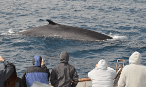 A great discount on a three-hour whale watching tour in San Diego.