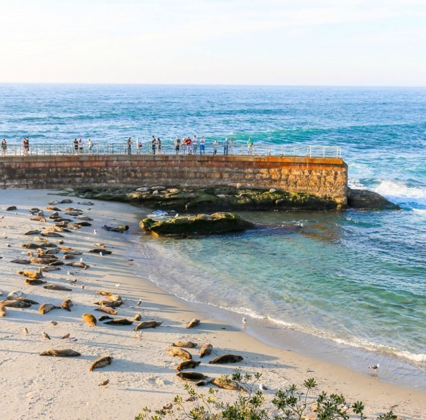 Guide to the Best Beaches in La Jolla