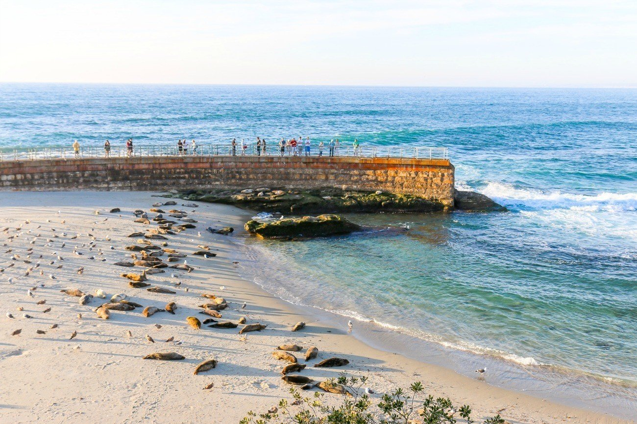Best Beaches In La Jolla La Jolla Attractions