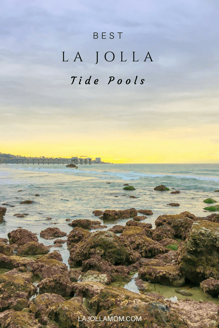 Learn where to go tide pooling in La Jolla, California and what seashore life you might see when you go.