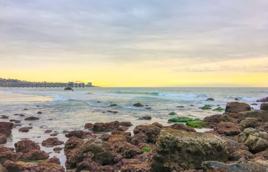 Tips for Visiting La Jolla Tide Pools