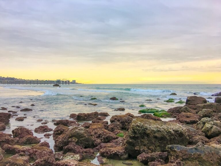 Expert Tips for Visiting La Jolla Tide Pools & Where to Go