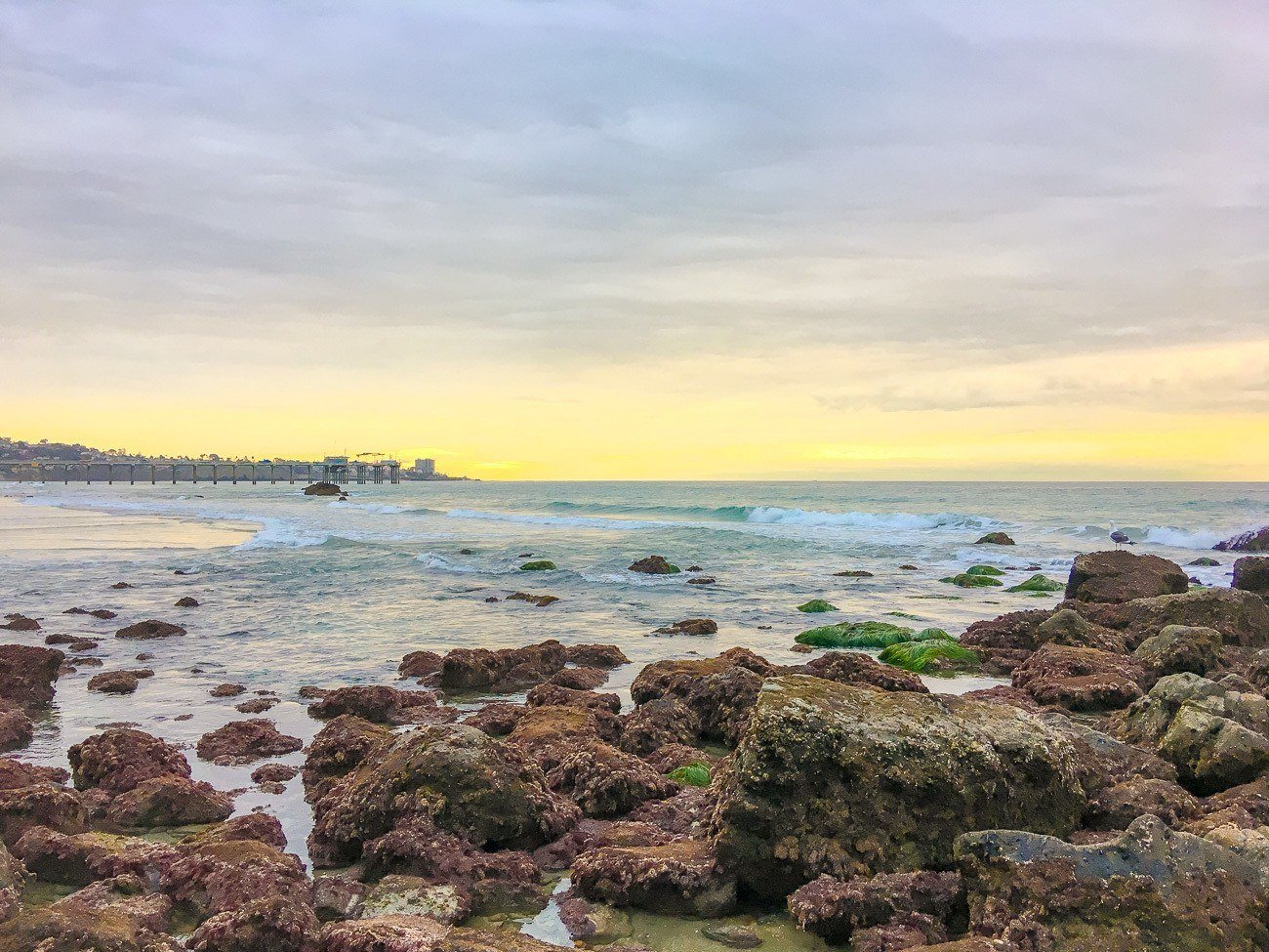 Tips For Visiting La Jolla Tide Pools Best Tide Pools In La Jolla