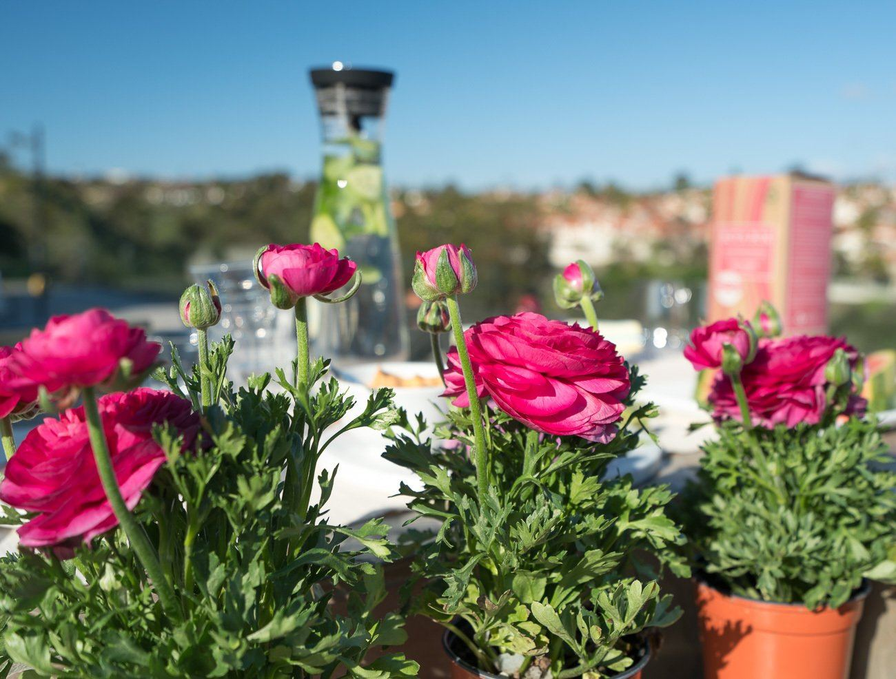 Use potted flowers and plants as decor for your next outdoor gathering.