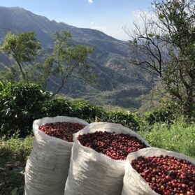 Alumbre Coffee: A New Small-Batch, Artisan Coffee to Feel Good About