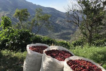 A small-batch, artisan coffee that you can buy online - Alumbre Coffee.