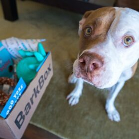 That Time Scooby Got a BarkBox for His Birthday