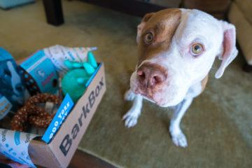 What it's like to receive a BarkBox for dogs in the mail (hint, it's pawsome).