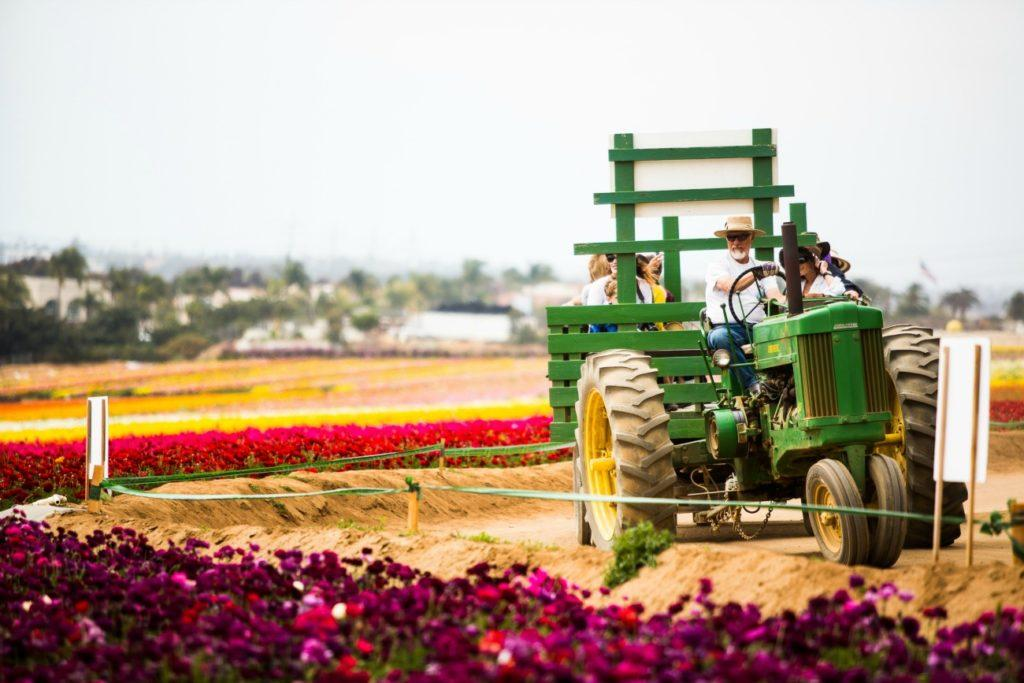 A green tractor drives through the  colorful flower fields.