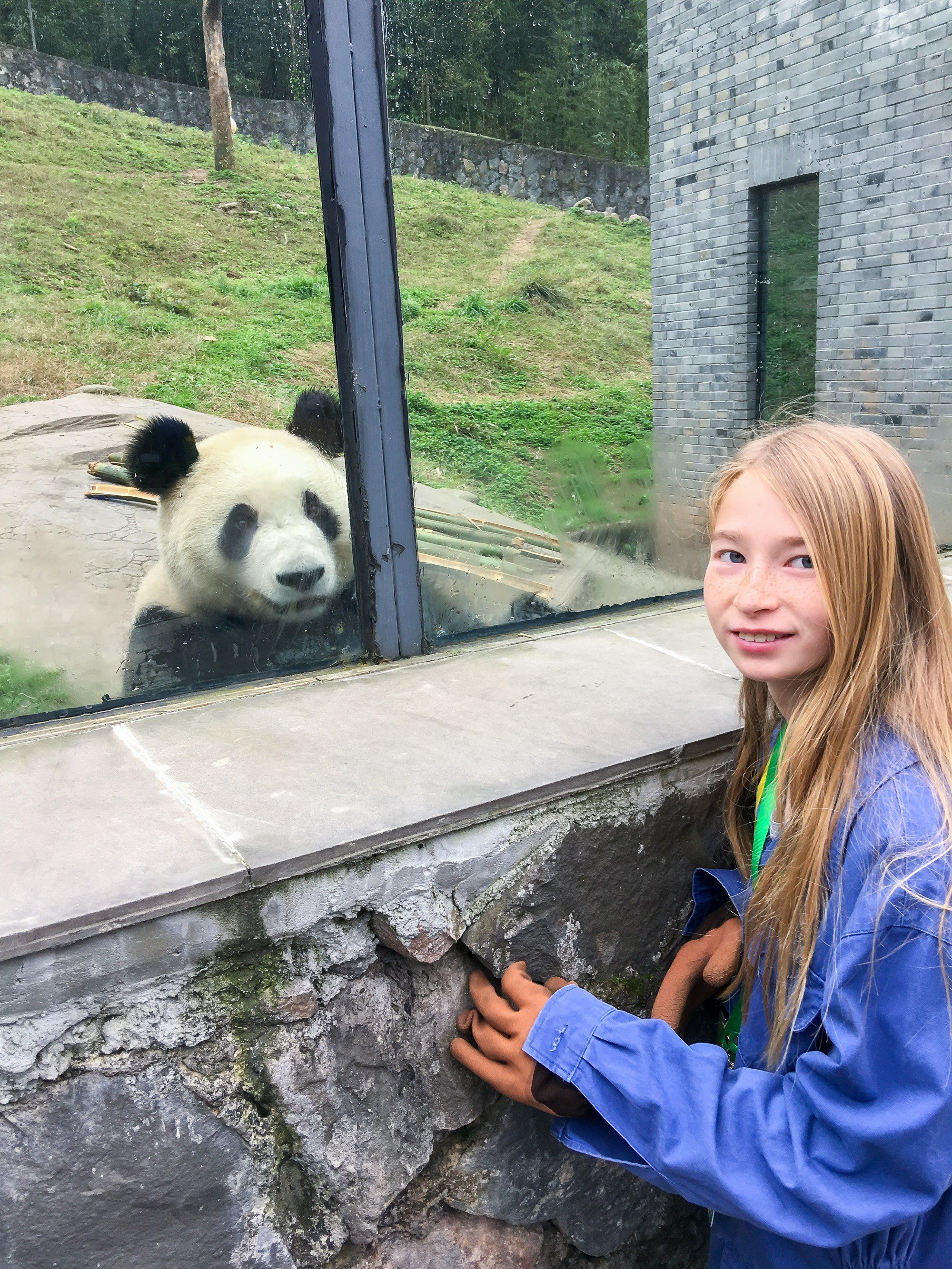 Volunteering at Dujiangyan Panda Base is a great thing to do in Chengdu.