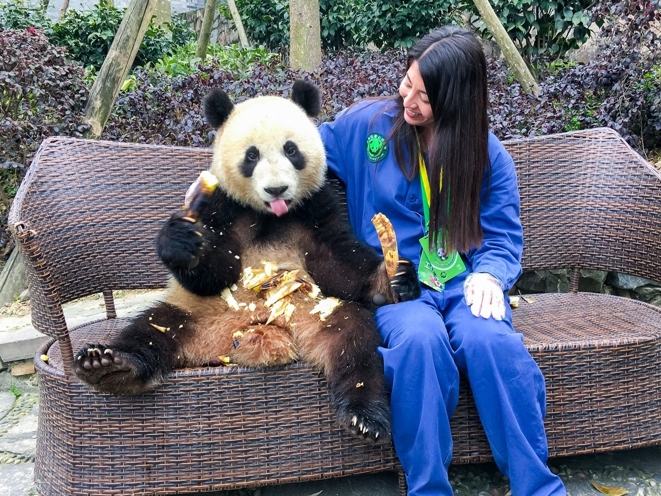 You can take a photo with a panda at Dujiangyan Panda Base in China.