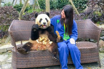 This is what it was like to volunteer at Dujiangyan panda base outside of Chengdu, China.