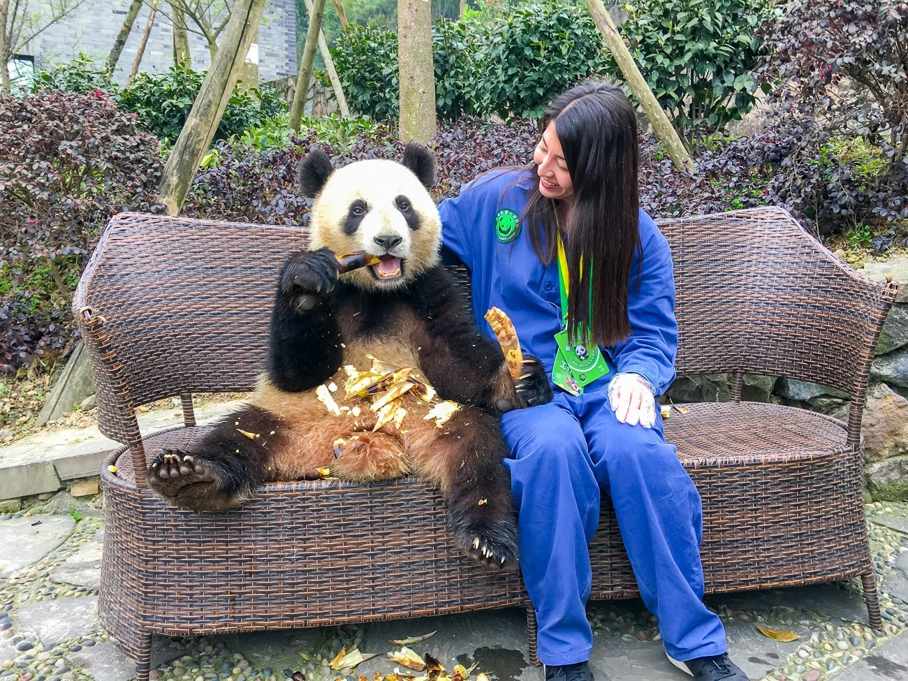 Our Dujiangyan Panda Base Volunteer Program And Photo With