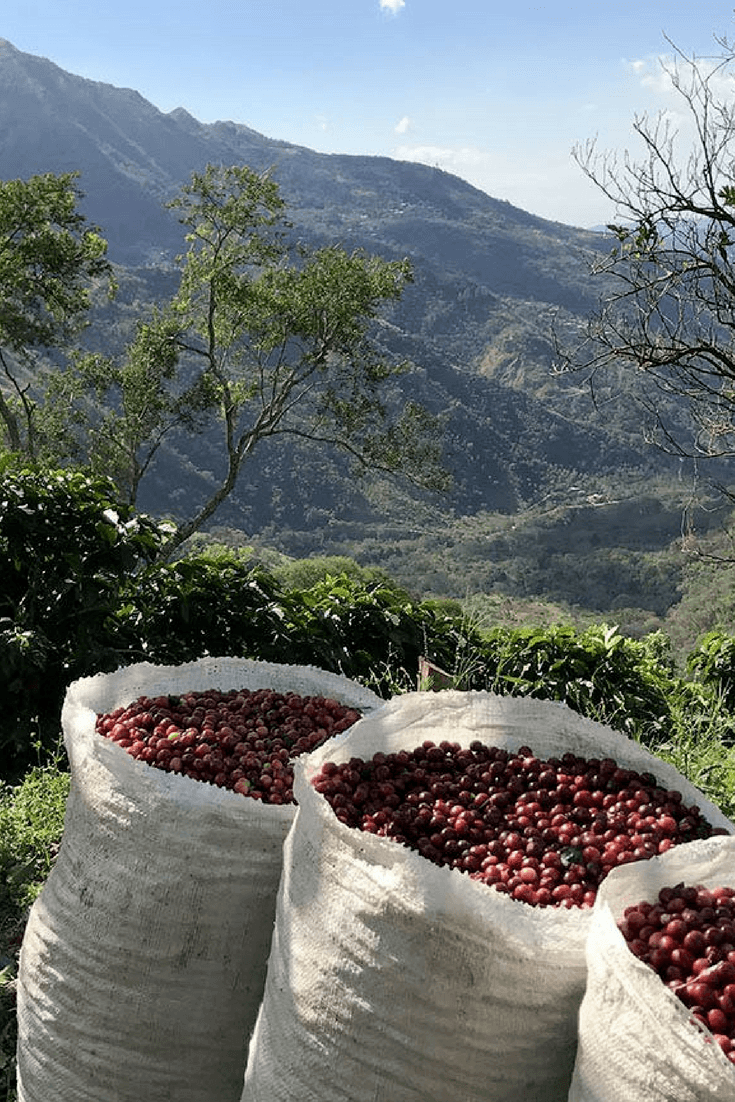 Alumbre coffee beans in a gorgeous Central American setting.
