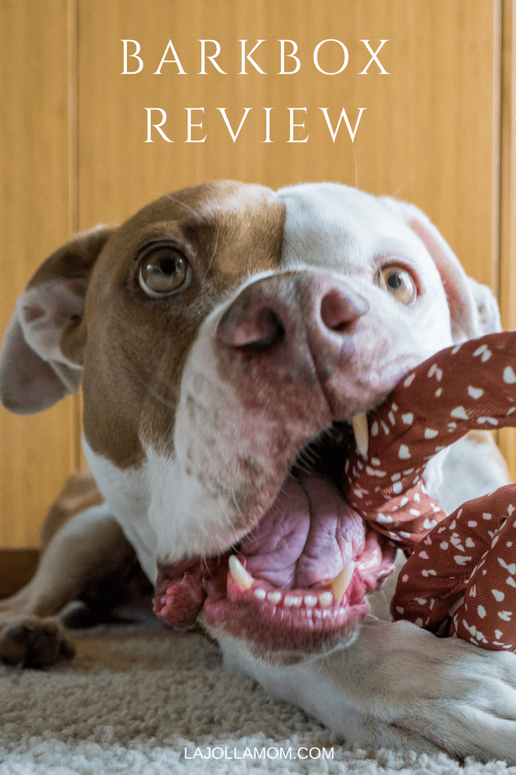 Every dog needs a BarkBox subscription. This guy gives it a glowing review.