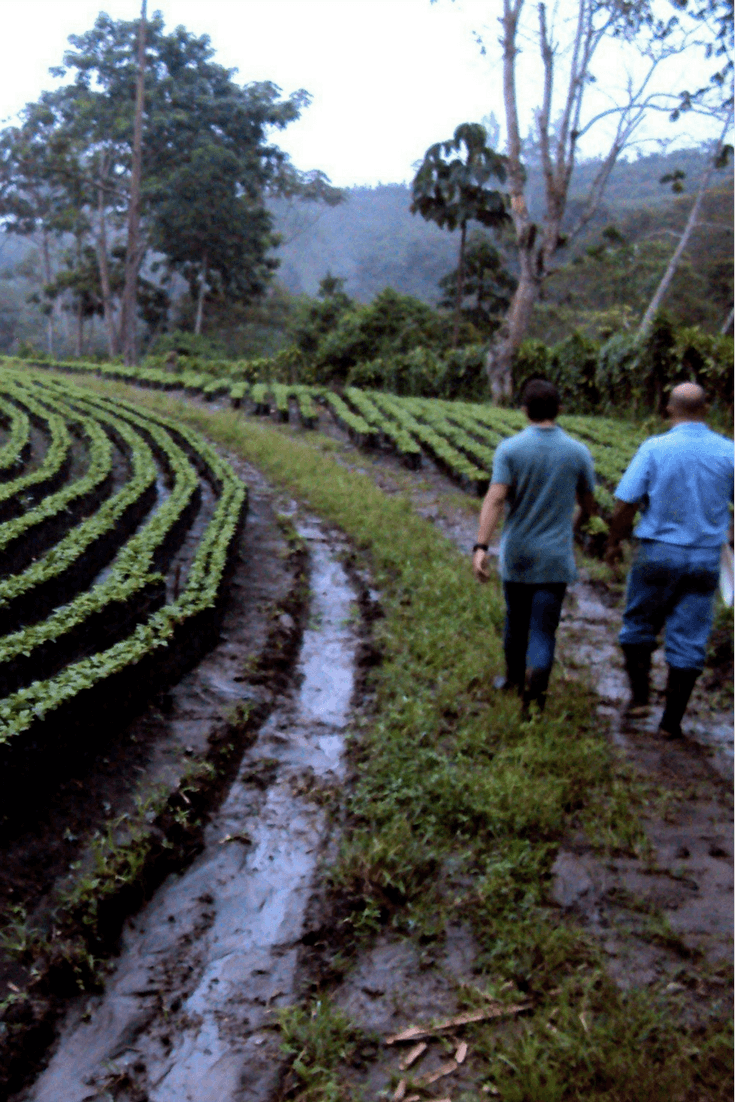 Alumbre Coffee is responsibly-farmed with the environment and workers in mind.