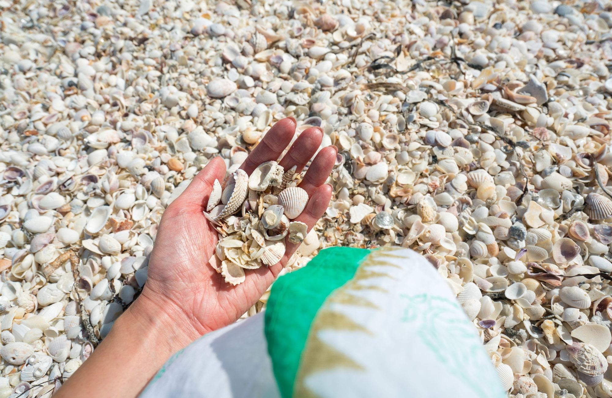 Shelling is by far one of the best things to do in Sanibel Island