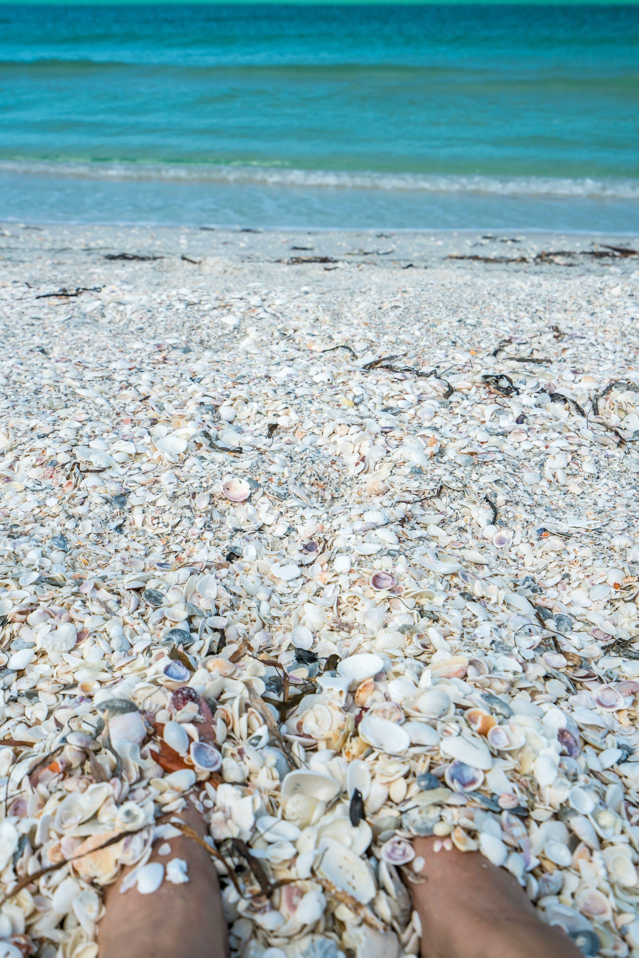 Seashells on Cayo Costa Island