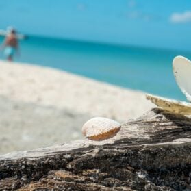 Enjoy the World's Best Shelling at The Beaches of Fort Myers & Sanibel