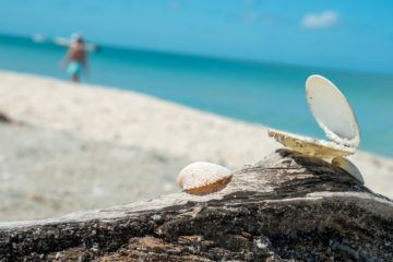 What it's like to go shelling on The Beaches of Fort Myers & Sanibel
