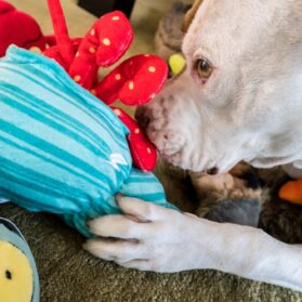 A Must-Have For Dogs Who Love to Destroy Toys