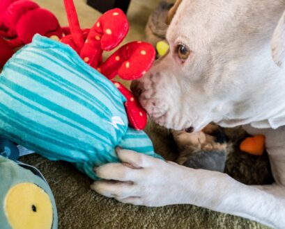 Super Chewer: A Must-Have For Dogs Who Destroy Toys