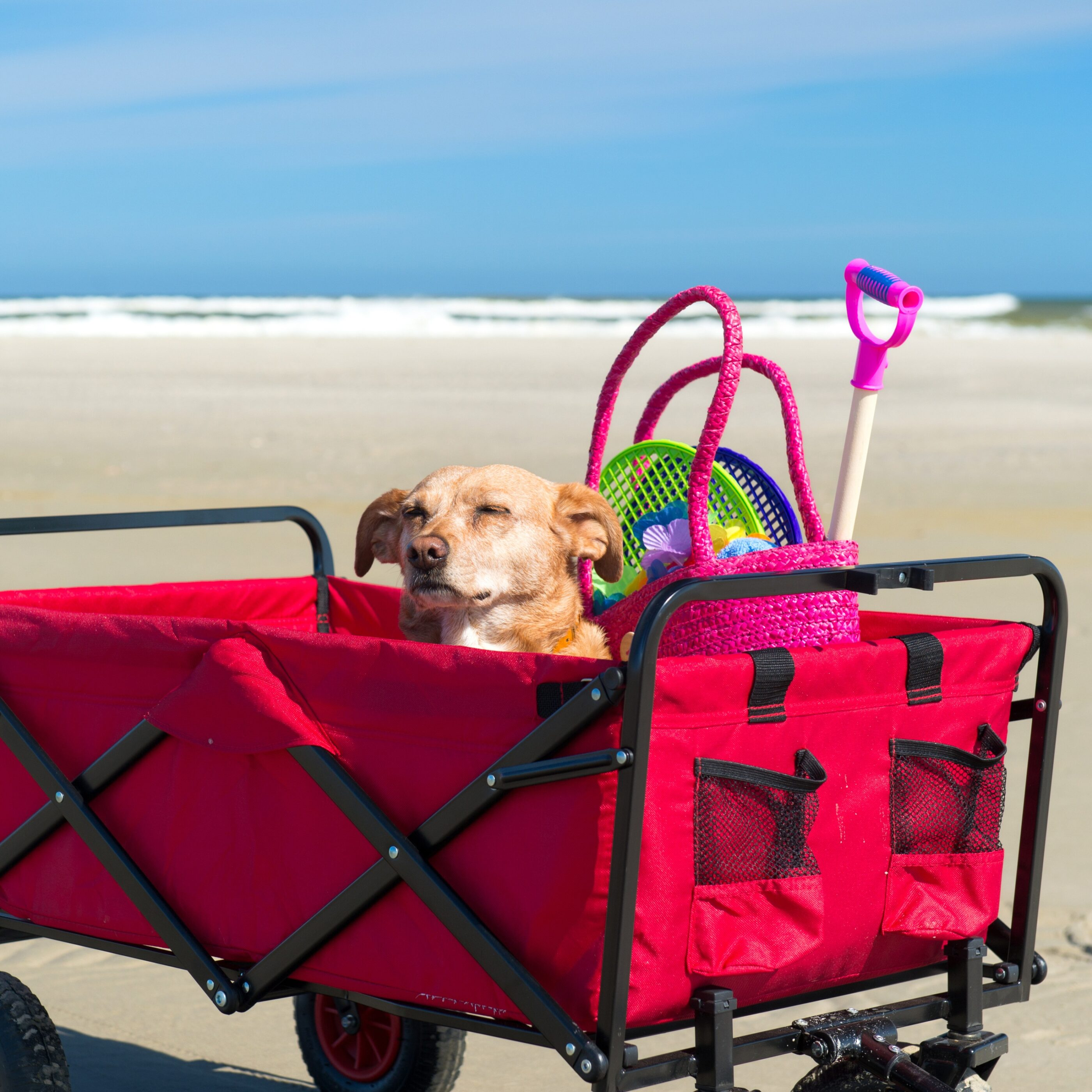 See the best beach gear from toys to crazy cool gadgets that you didn't know you needed.