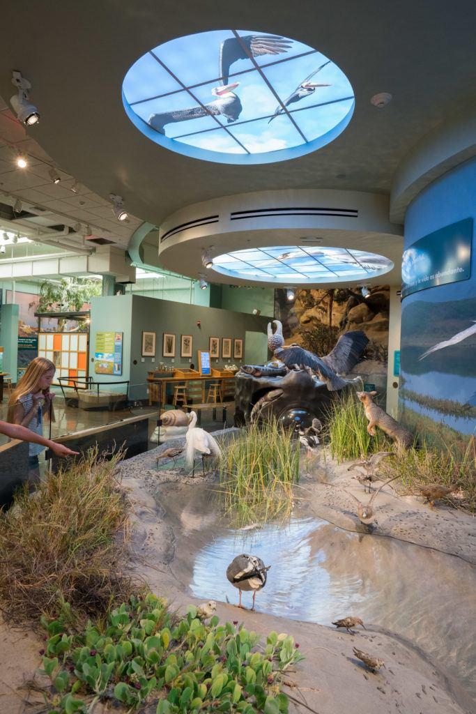 L'exposition Coast to Cactus au musée d'histoire naturelle de San Diego présente la flore et la faune locales.