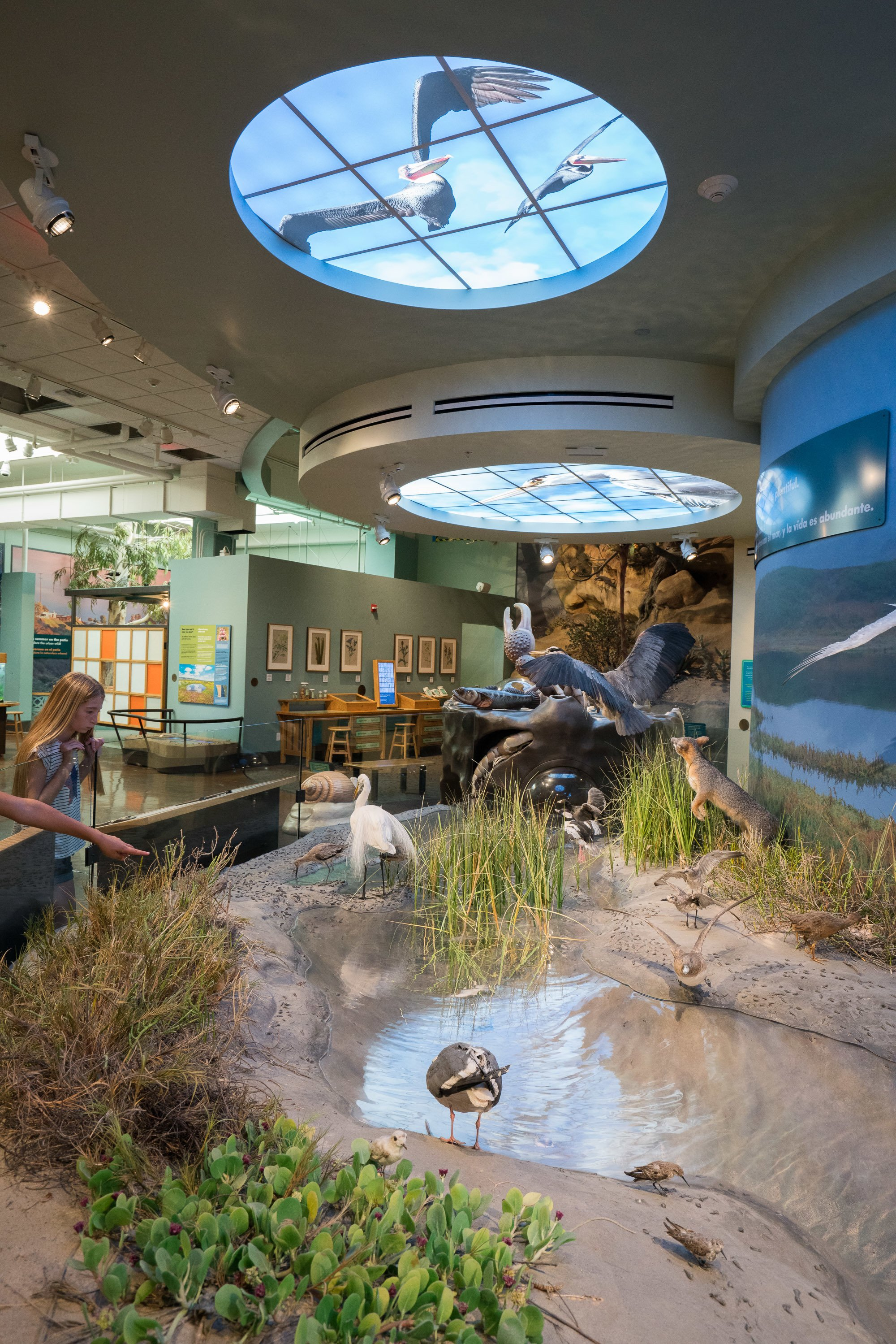 The Coast to Cactus exhibit at the San Diego Natural History Museum showcases local flora and fauna.