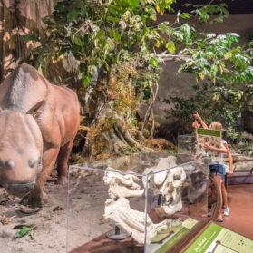 A Local Kids' Guide to the San Diego Natural History Museum