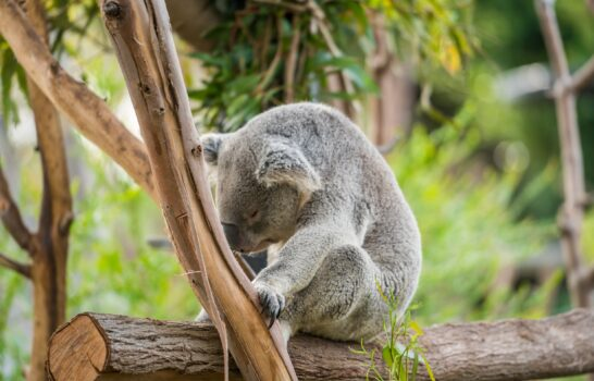 How to Buy Discounted Tickets to the San Diego Zoo