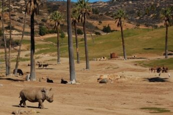 How to Buy San Diego Zoo Safari Park Discount Tickets