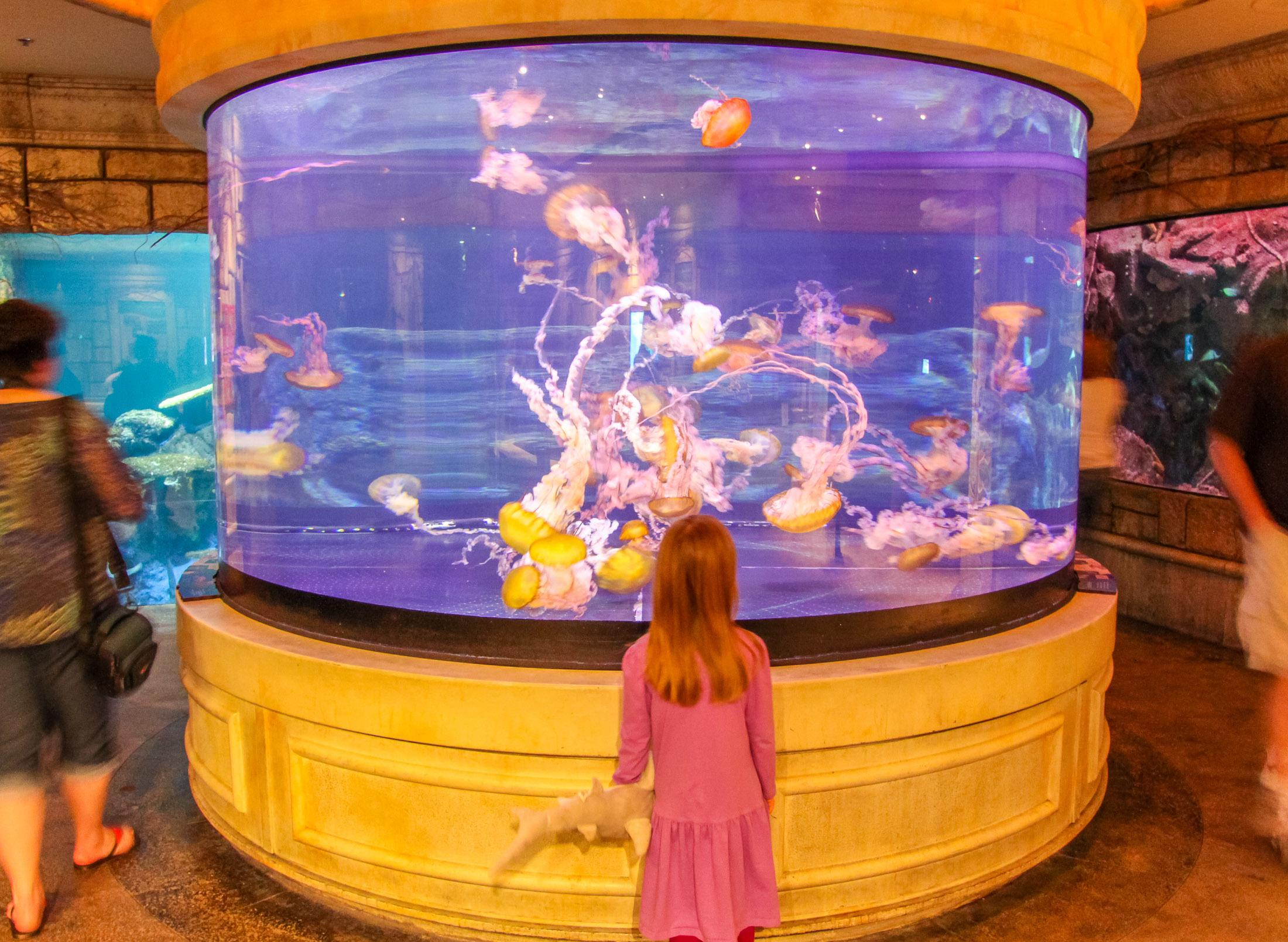 My daughter is standing in front of the jellyfish tank at The Shark Reef Aquarium, one of the fun activities in Las Vegas with kids.