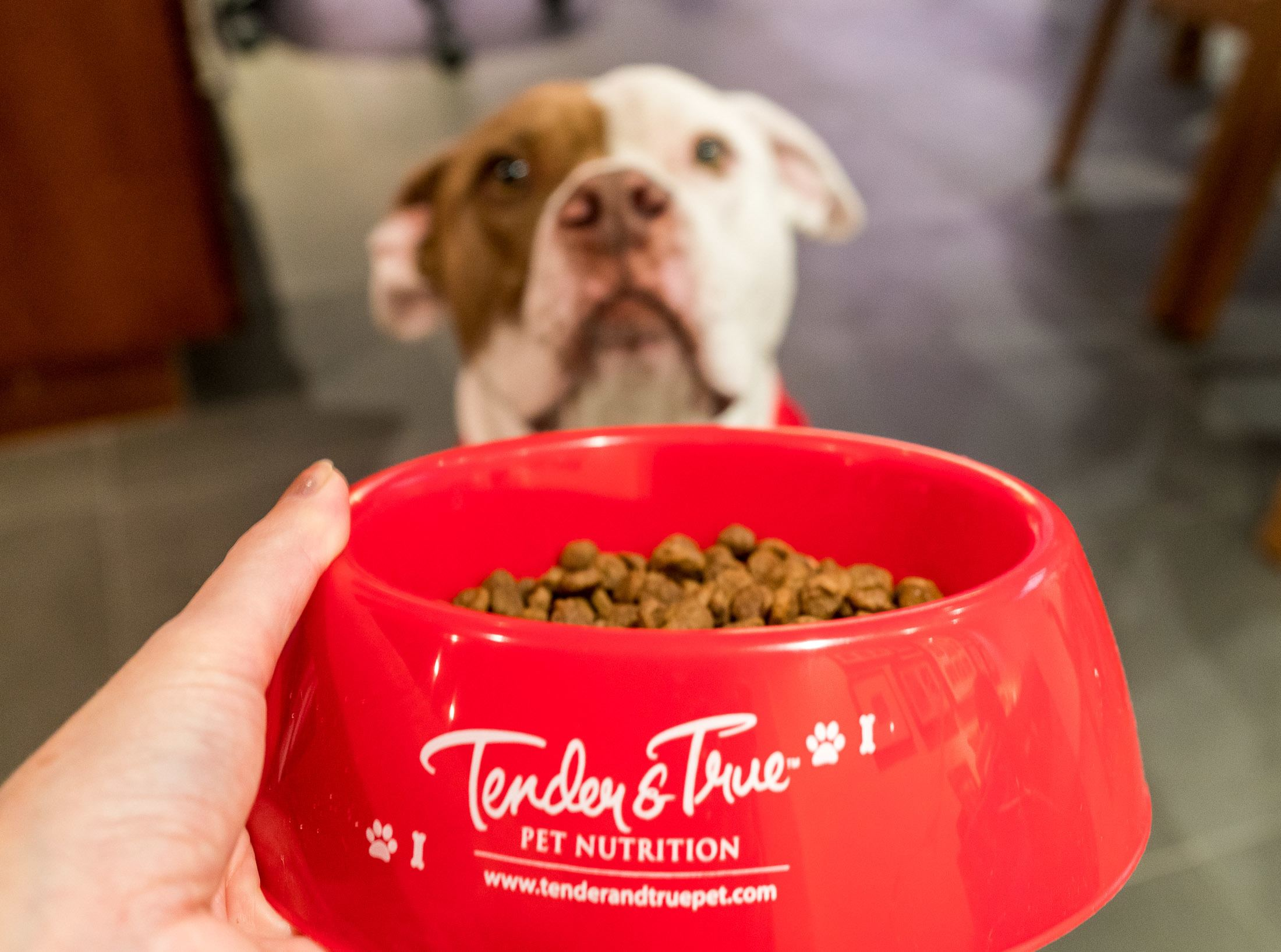 Tender and True is considered a pet superfood.