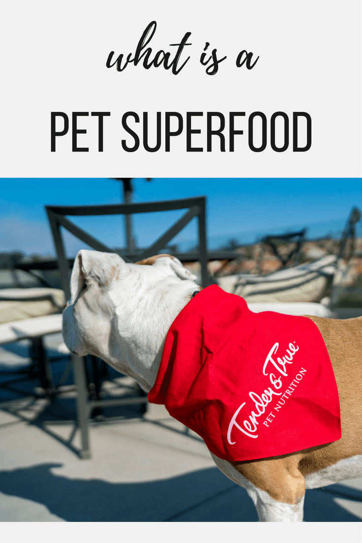 Learn why a pet superfood can be important to your dog.