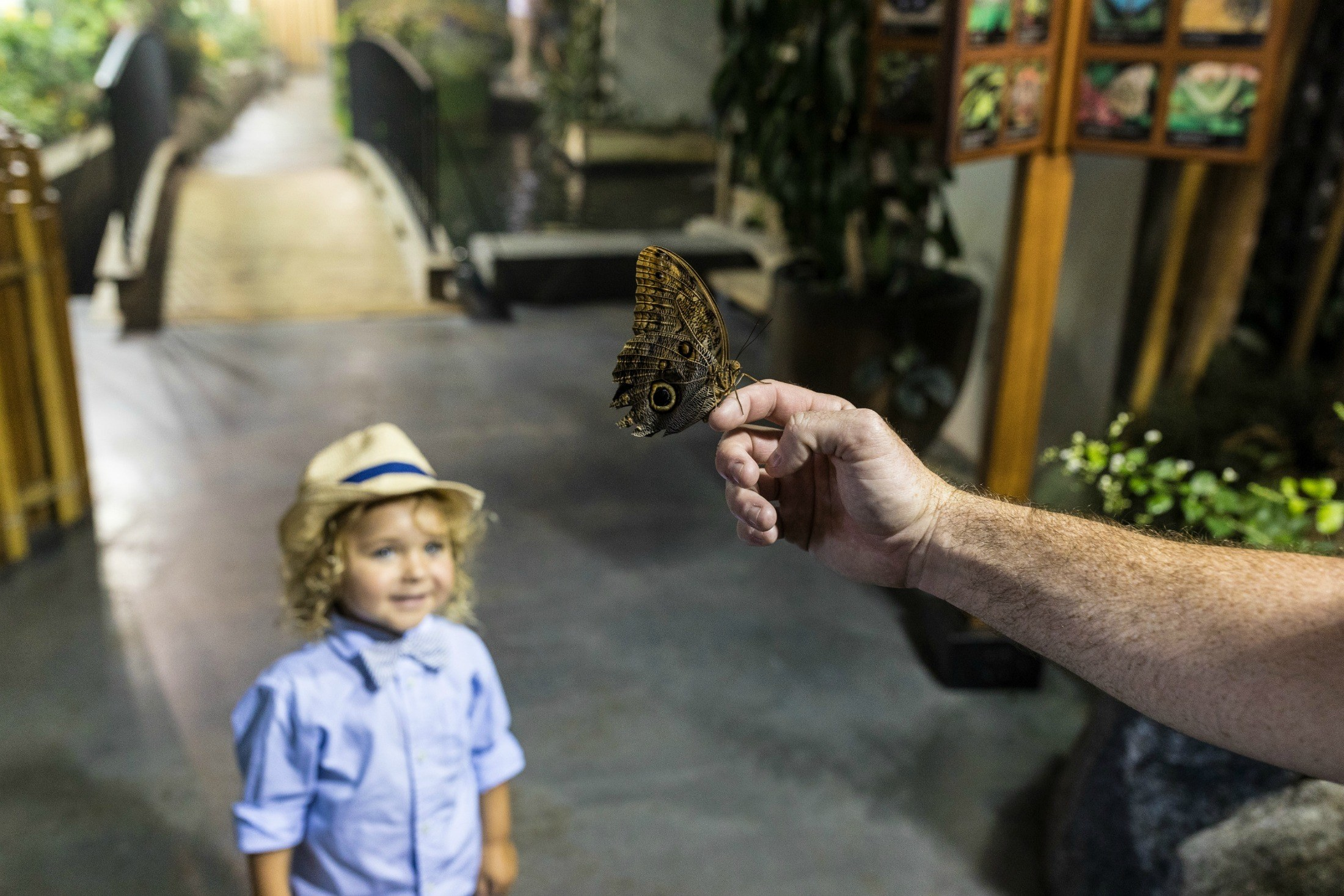 The Audubon Butterfly Garden and Insectarium is one of the best things to do in New Orleans.