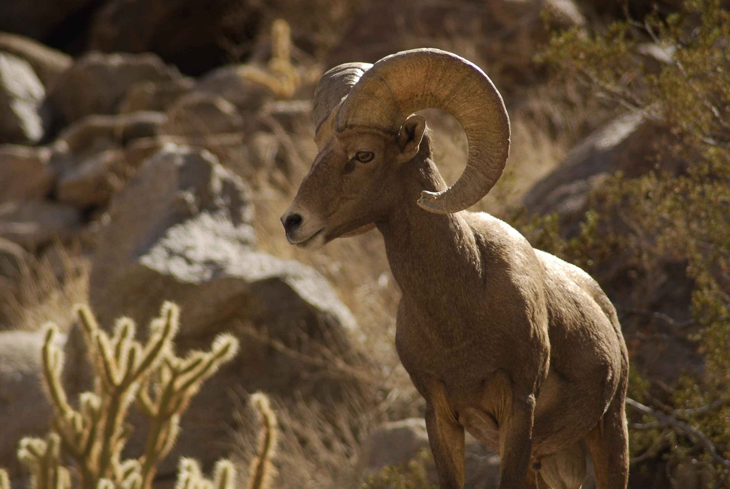 Top 13 Reasons To Visit Anza Borrego Desert State Park