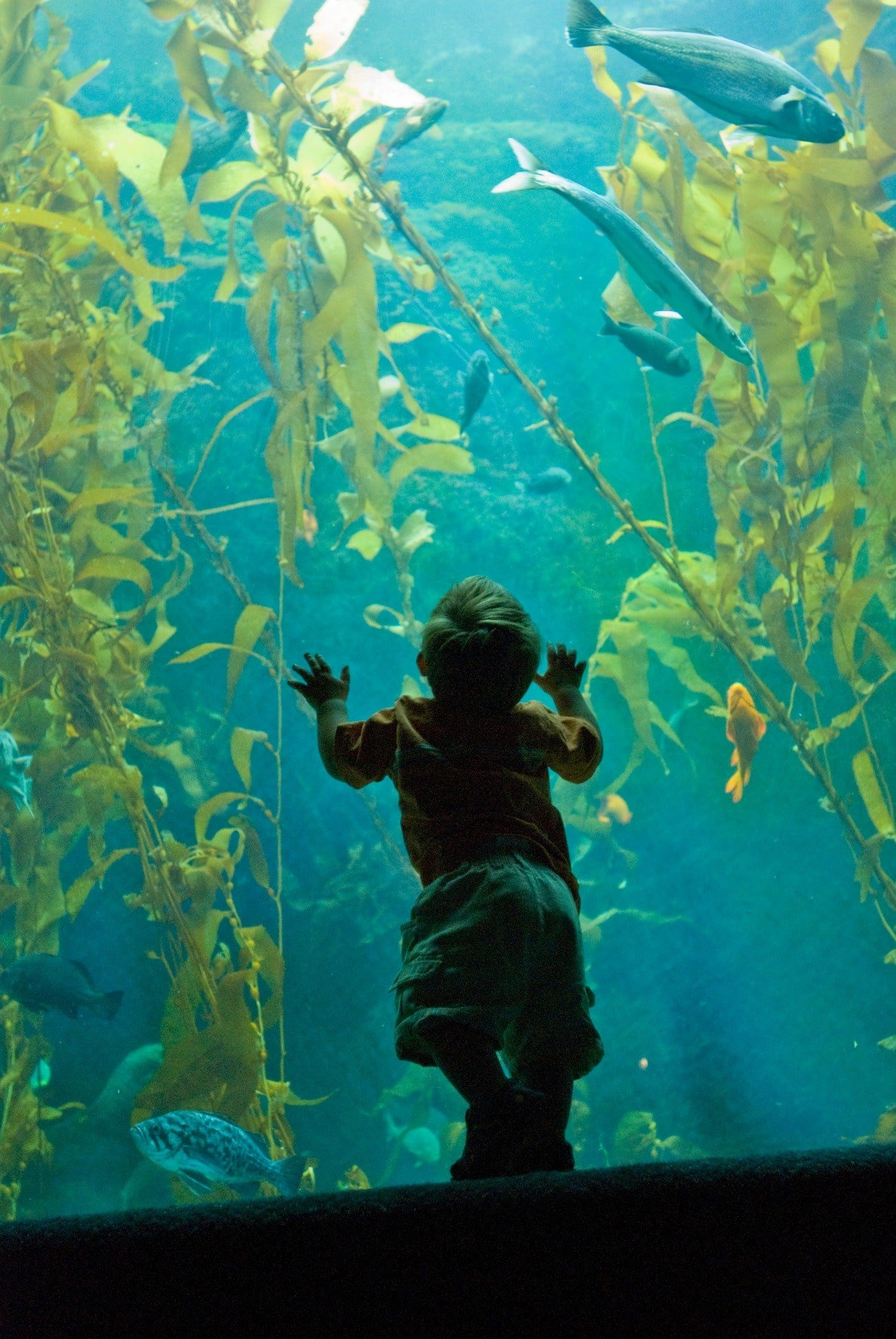 The Birch Aquarium is one of the best things to do in La Jolla Shores.