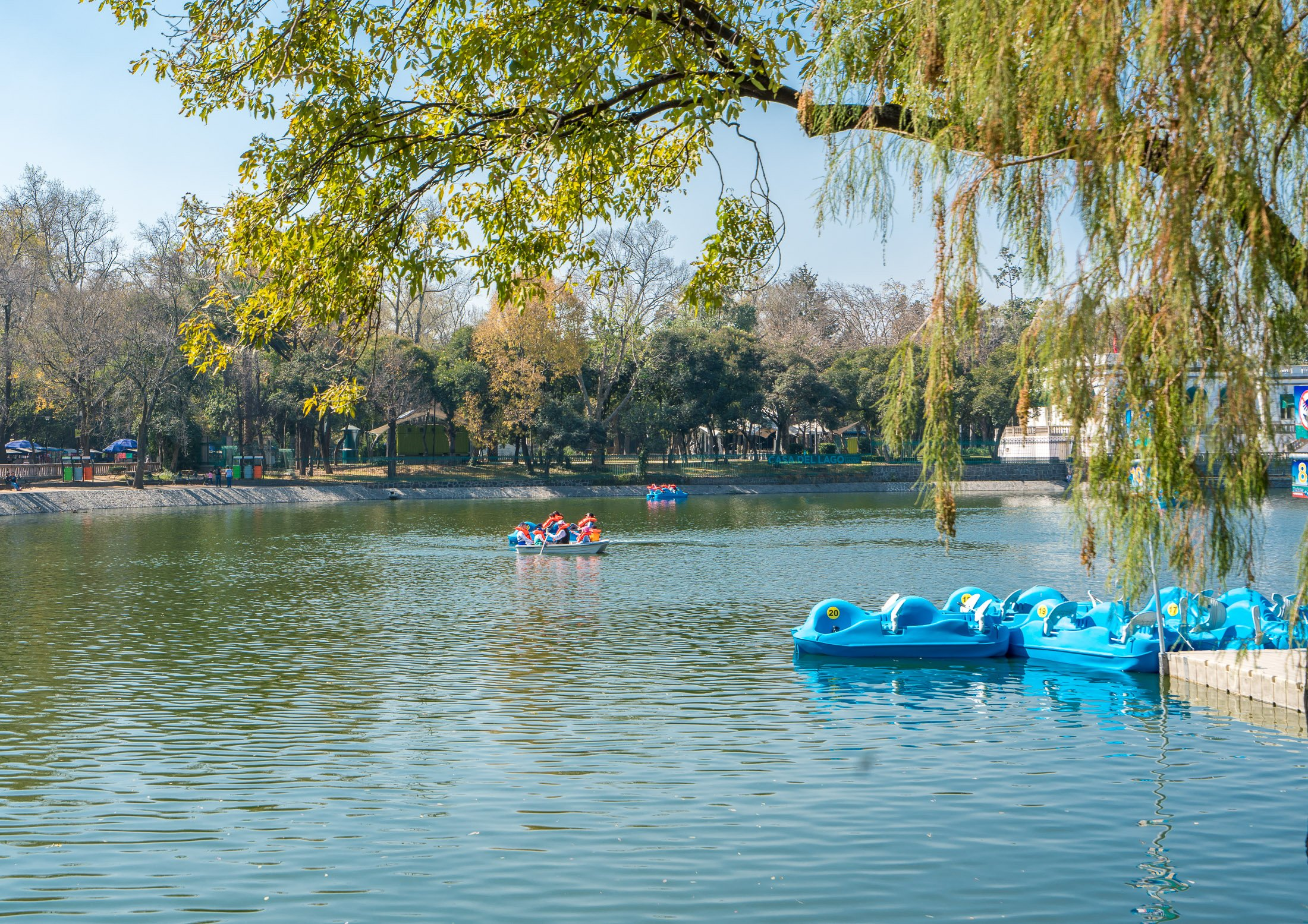 Ride Paddle Boats on Chapultepec Lake in Mexico City