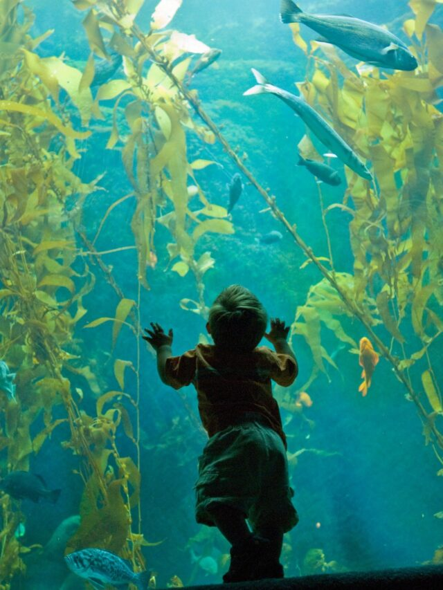 Top Things to Do in La Jolla with Kids Story
