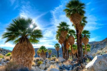Things to Do at Anza-Borrego Desert State Park with kids